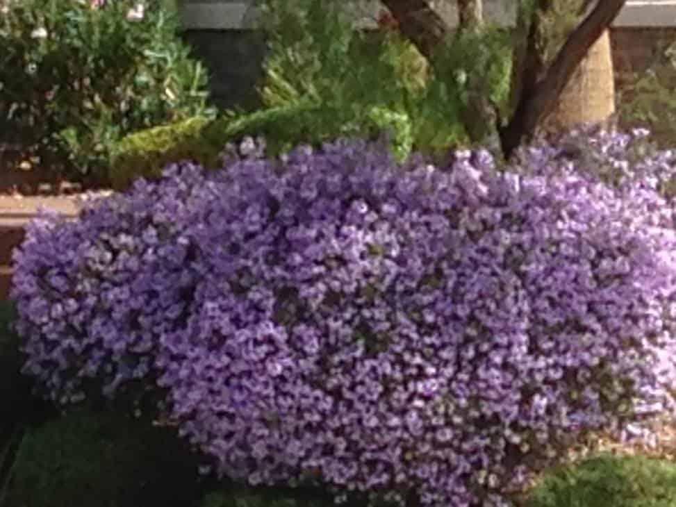flowers aim program